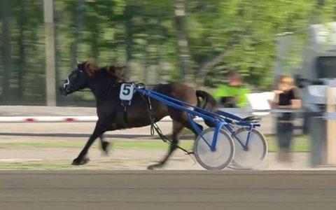 DØDE: Hesten Hovhaaga løp ut og traff en bom. Hun døde i ulykken.