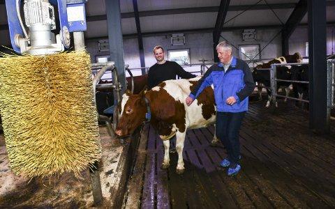 I Luksusfjøset: Fagarbeider Kjetil Olimstad og fjøsmester Tor Arnt Fone gleder seg over gode resultater. Ingen andre kuer produserte mer melk enn kuene her. I forgrunnen er kløbørsten, som dyrene selv kan bruke ved behov. Foto: Marianne Drivdal