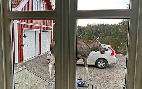 Denne fine bildemontasjen la Leif Hallgeir ut i dag morges.
