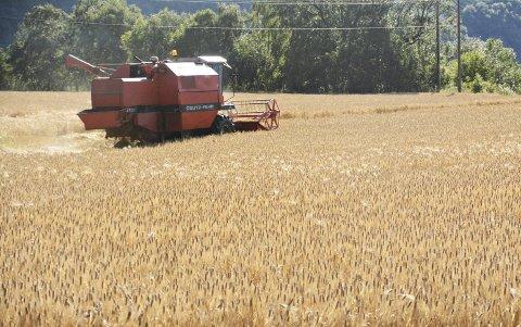 Sent men godt: Dette bildet er imidlertid fra en tidligere kornhøst i Sunndal.