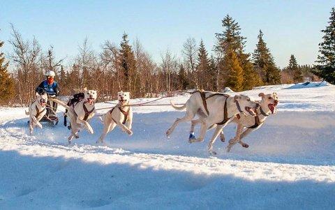 FULL FART: Det går fort i svingene når Katrine Fugleberg og hundene er i konkurranse. Spannet består av fra foran: Quick (10) og Kaiser (3), Jubel og J-lo (4), Joppe (4) og Pluto (8).