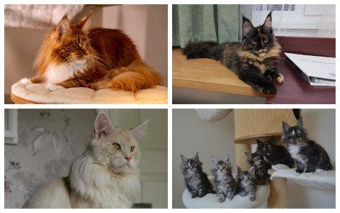 KJENDISER: Kattene til Bettina og Grethe Bachmann fra Moss har blitt internettkjendiser over natta.