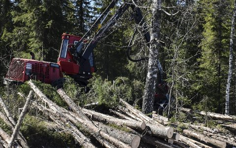 HOGST: – For en skogeier som har skog med store naturverdier, vil det alltid være mest lønnsomt å tilby skogen til vern etter naturmangfoldloven, mener artikkelforfatteren.
