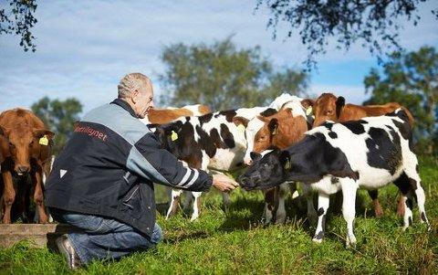 DYREVELFERD: Mattilsynet fikk rekordhøye 12.666 bekymringsmeldinger om dyrevelferd i fjor, og avdekket alvorlig vanskjøtsel av dyr i 63 dyrehold.