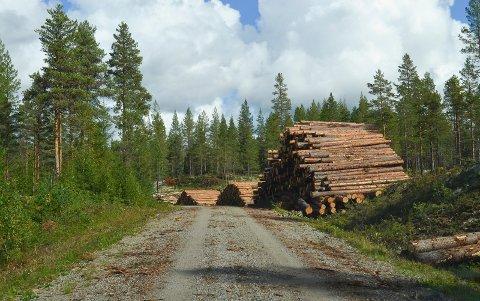 KAN BLI MINDRE VIKTIG: Skogens rolle i klimaregnskapet kan bli mindre viktig. (Foto: Bjørn-Frode Løvlund)