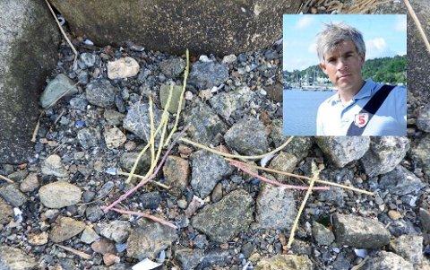 TRÅDER: Ole Jacob Hansen er prosjektleder for Renere Sandefjordsfjord. Han tror ikke sprengtrådene i plast som er funnet i skjærgården stammer fra prosjektet.
