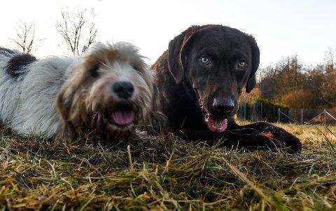 HUNDENAVN: Hunden Centa og hunden Milly er ikke på fjorårets liste over de mest populære hundenavnene, men det virket som de hadde et avslappet forhold til det.