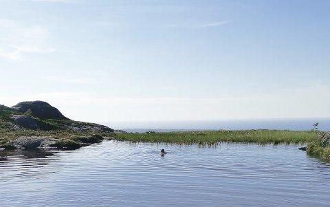 IDYLL: Det finnes flere badevann på vei opp til Freikollen.