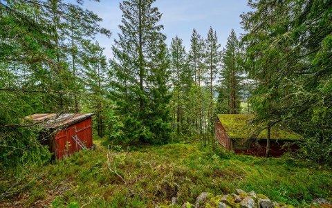 RENOVERINGSOBJEKT:Hytta nederst i Fjellveien er bygget i 1940 og totalt falleferdig.