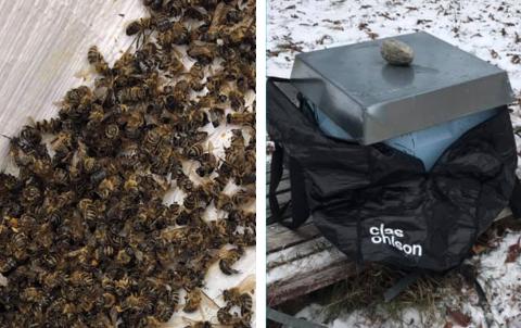 DØDE: Ifølge birøkteren ligger det flere tusen døde bier igjen på utsiden og rundt kuben. Gjerningspersonene har flyttet kuben og satt den i en pose, før det ser ut som de har blitt forstyrret i tyveriforsøket.