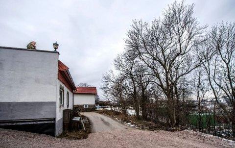 SKADEVERK: 74 år gamle Laila Bergstrøm er dømt for å ha tatt seg til rette ved å kappe deler av kommunens trær på Nabbetorp.