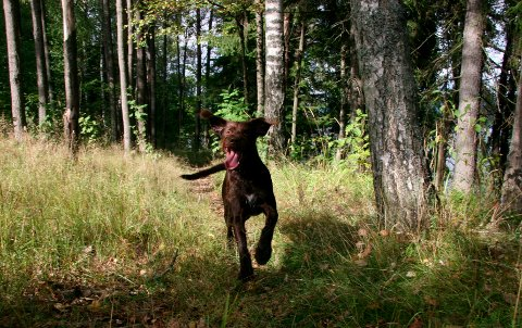 BÅNDTVANG: I perioden 1. april til 20. august kan du ikke la hunden din løpe løs. Illustrasjonsfoto/Arkivfoto