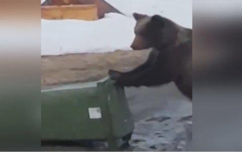 Til slutt ble situasjonen uholdbar for beboerne i huset, og bjørnen ble skutt.