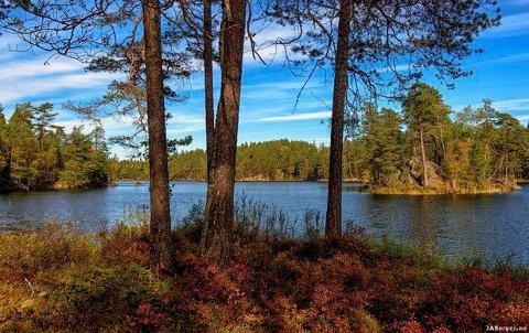 Regjeringen verner nå tre skogområder i Indre Østfold. Illustrasjonsfoto