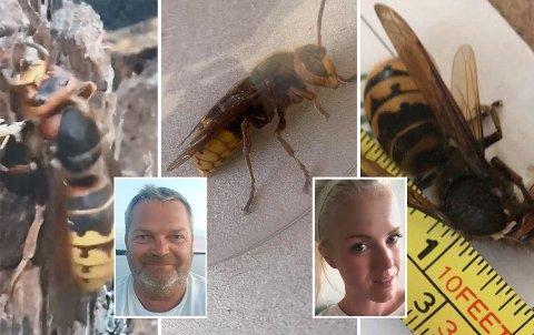 MANGE: Det er mange som har vært tett på «monstervepsen» i år. Slik opplevde de lokale innbyggerne det. Fra venstre: Pål Kenneth Hangaard og Linn Kristiansen.