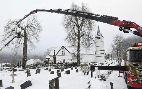 Lang rekkevidde: Etterhvert som trepleier Fredrik Stea Wiik kuttet av deler på treet, sørget Midtstøl Transport for å løfte dem bort fra kirkegården. Denne løftearmen har en rekkevidde på hele 31 meter. Foto: Øystein K. Darbo