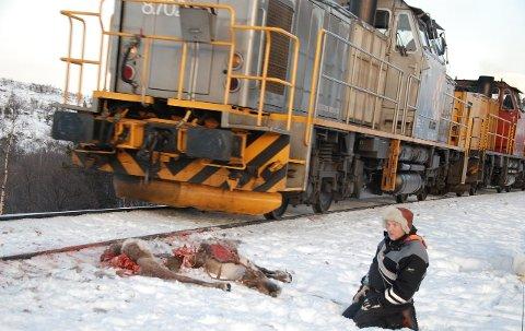 227 rein: Reineier Olof Anders Kuhmunen fortviler over nok en kollisjon mellom tog og rein på Saltfjellet. Nå setter han sin lit til et lenge etterlengtet gjerde på begge sider av jernbanelinjen.