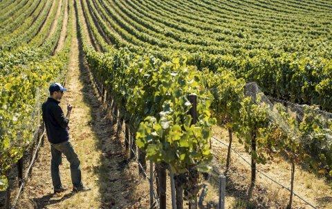 Santa Barbara er USAs svar på franske Bourgogne. Her er det først og fremst to druer som gjelder – Chardonnay og Pinot Noir. Justin Willett og hans Tyler Wines er en av topp-produsentene i denne delen av California.