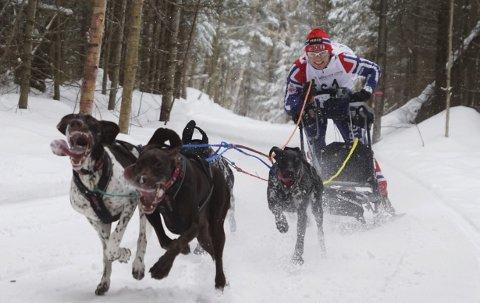 Full fart! De fire hundene gir alt for Lena Boysen Hillestad.foto: Lotte Friid Fladeby
