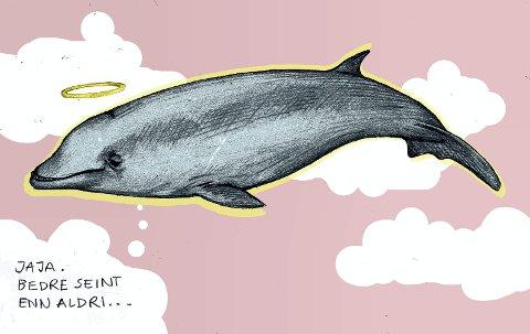 Hval som ga oss en vekker: Sotra-hvalen måtte bøte med livet, men den gir liv til store ryddeaksjoner og miljøengasjement. Illustrasjon: Marianne Karlsen