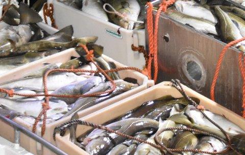 ILLUSTRASJONSFOTO: Fiskarlaget og Sjømat Norge AS mener det er forkastelig hvis det foregår juksing under årets lofotfisket.
