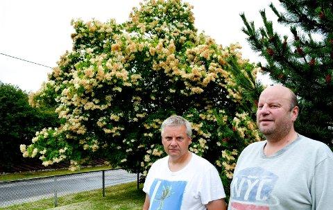 FLOTT TRE: Eier Rune Reiremo (til høyre) og nabo Nils Gunnar Strand sier den sibirske syrinen ikke har blomstret så fint på 10 år. (Foto: Bjørn-Frode Løvlund)