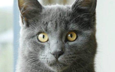 – Sannheten er at jeg tenker ikke i det hele tatt, jeg bare ER, skriver Anettes katt i ukens Lørdagstanker.