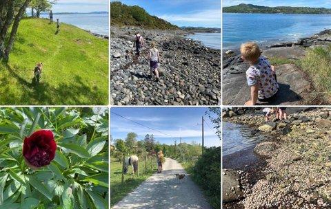 Tur til Brimse: Familien Dyrseth stortrivdes på øyhopping i eget nærmiljø. Her mer ulike bilder de tok fra da de var på Brimse søndag i pinsen.