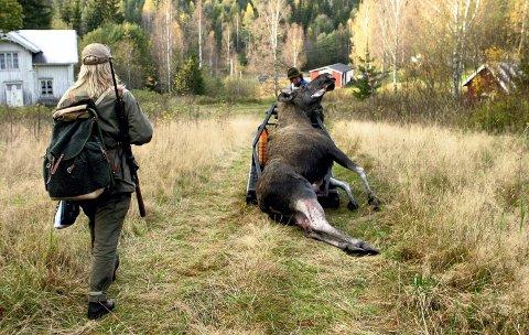 TIDLIG JAKT: Grue, Kongsvinger og begge Odals-kommunene vil si nei til å starte elgjakten 25. september. De ønsker å beholde 5. oktober som jaktstart.