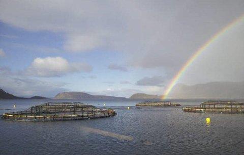 KUN Én gang: Hvis Salmar får godkjent nye lokaliteter i Laksefjorden, kan de sette ut smolt kun én gang. Det kom kommunestyret fram til med ni mot åtte  stemmer etter lang debatt.Foto: Salmar