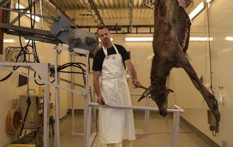 VILTBEHANDLING: Øyvind Tandberg slakter denne uka hjort fra eget oppdrett. Når elgjakta starter, er han avhengig av at kjøttet går raskt igjennom anlegget. – Hva slags situasjon det blir, vet vi ikke før to-tre dager ut i elgjakta, sier han.Foto: Sæmund Moshagen