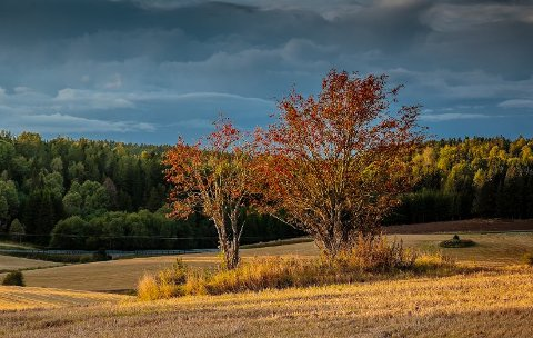 NYDELIG: Høsten er her, og fargene hinter om at sommer'n er over, og snart blir det vinter. Nå er det bare å nyte, og i helgen blir det deilig både i Follo og i store deler av landet. Søndagen derimot blir vår.