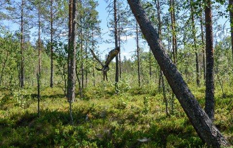 NATURMANGFOLD: 97 prosent mener at det er viktig å stanse tap av naturmangfold, viser en kartlegging.