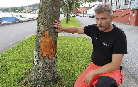 Koster flere tusen: Tom Erik Pettersen i kommunens avdeling for bydrift sier at treskadene kan gi påløpende kostnader på 100.000 kroner. Han ber nå publikum om å holde utkikk etter hunden som river av barken på de kommunale trærne.