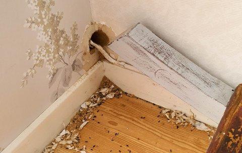 MUSEINNBRUDD: Her har musa sett sitt snitt til å snike seg inn på hytta.