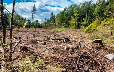 FLATHUGST: Grethe Danielsen ble sjokkert da hun i sommer kom over dette området, som nylig var flathugget i regi av Viken Skog.