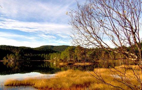 Høst ved Håkkåsvatnetl. (Foto: Anne Marie Øverås)