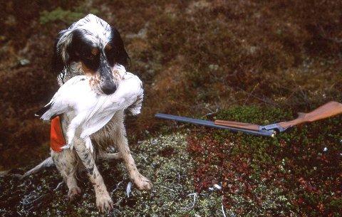 Statskog ber jegere med hund om å følge Mattilsynets og Veterinærinstituttets anbefalinger så lenge årsaken til hundesykdommen er ukjent. Foto: Vidar Ruud / NTB scanpix