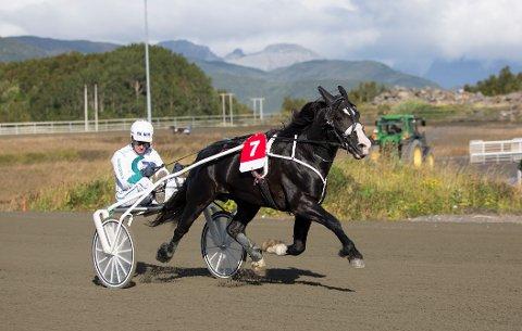 Hingsten Myr Faksen har vunnet løp i både Norge, Sverige og Finland, og besøker Bodø til helgen.