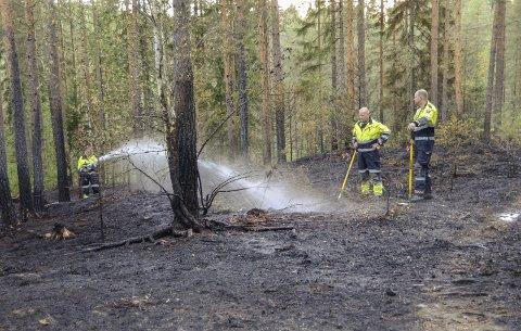 SVART: Skogene i Midtfylket har blitt svartsvidd i løpet av helgen, som her ved Skalstad i Åmot.