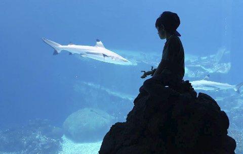 BASSENG: Antonio fant endelig bassenget med haiene. På zoo i Nederland sammen med bestemor og bestefar. Foto: Aud Rensmoen.