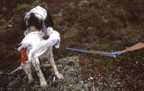 Lierne, oktober 2007. Jakt, hund, rype,  hagle. Fuglejakt Foto: Vidar Ruud / NTB scanpix