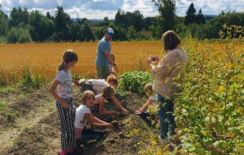 POTETHØSTING: Det er en økende interesse for andelslandbruk i Norge. Her tar små og store del i høsting av poteter og andre grønnsaker.