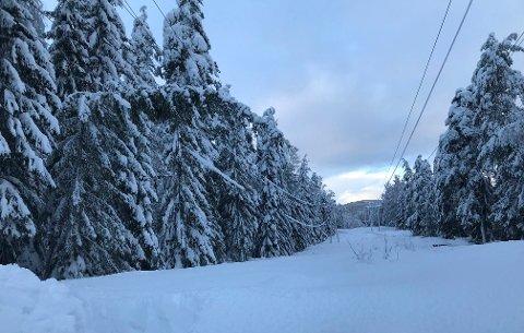 RYDDING: Bøyde og knekte trær over strømlinjene, var årsaken til de fleste av de totalt 15 strømbruddene i Kongsberg mandag og tirsdag. Dette bildet tok Øistein Høiberg på befaring i Jondalen tirsdag.