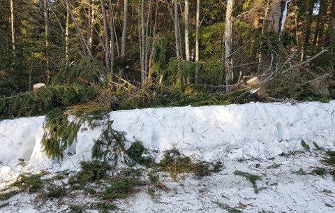 Treet har blitt kappa opp og ryddet fra veien.