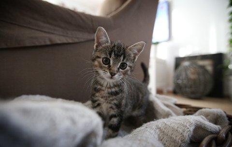 SVAR 4: Det er faktisk fakta. Verdens første klonede katt fikk navet Copy Cat.