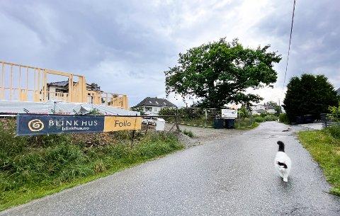 STASELIG: Eika i Fossveien 14 er et landemerke på Langhus. Treet skal fortsatt tas godt vare på, selv om det ikke blir satt opp noe nytt Fredet-skilt på stammen.