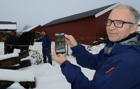 FILMET: Jan Magne Midtsundstad filmet ulven natt til søndag. Den var til slutt bare tre meter unna hesten til søskenbarnet Halvor Midtsundstad på Våler vestside.