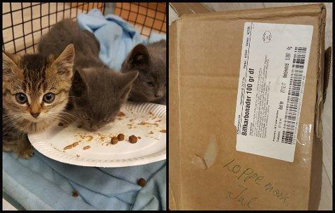 HJERTERÅTT: I en tom eske med biffkarbonader ble kattene funnet.