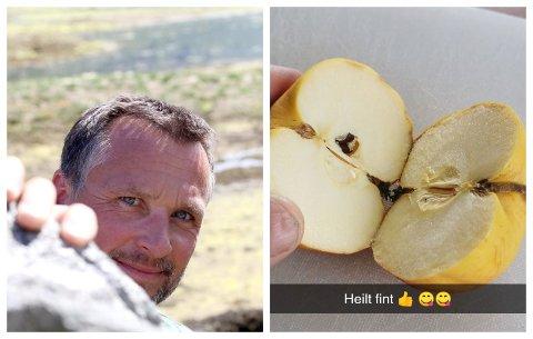 EPLE ANNO 2018: Jarle Mundal undrar seg over kva som er i epla når dei kan etast fleire år etter at dei er kjøpte.